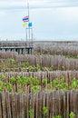 Free Mangrove Royalty Free Stock Image - 25512426