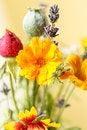 Free Wild Flowers Royalty Free Stock Photo - 25514515