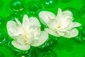 Free Delightful White Jasmine Flowers Floating On Water Stock Images - 25516734