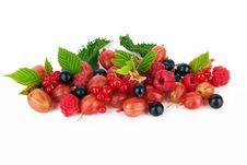 Free Berries Stock Photo - 25510650