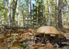Free Mushroom Royalty Free Stock Image - 25510956