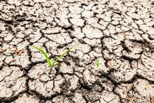 Free Dry Soil Surface. Royalty Free Stock Photo - 25512275