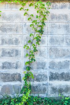 Free Parasitic Old Walls. Stock Images - 25512304