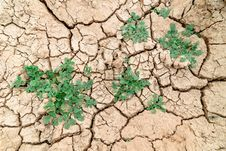 Free Plant In Dried Cracked Mud Royalty Free Stock Image - 25512406
