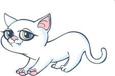 Free Kitty Stock Photo - 25512710