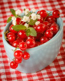 Free Red Currant Royalty Free Stock Image - 25514666