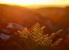 Free Silhouette Stock Image - 25516581