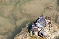 Free Crab Stock Photos - 25517093