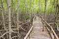 Free Boardwalk In Mangrove Forest Royalty Free Stock Photography - 25526027