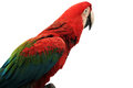 Free Parrot Stock Images - 25529014