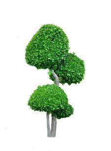 Free Isolated Tree Royalty Free Stock Photos - 25527078