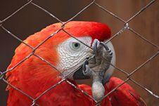 Dreams Of Freedom - Sad Parrot Behind Bars Stock Photo