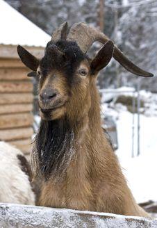 Free Goat Portrait Stock Photo - 25533550