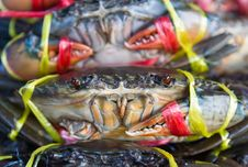 Free Fresh Crabs On Sale Stock Photo - 25536440