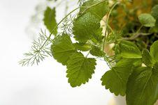 Free Mixed Herbs Stock Photo - 25537720