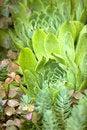 Free Unusual Garden Plant Stock Image - 25545741