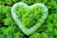 Free Green, Green Heart Stock Images - 25542374