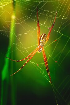 Free Spider In Web Royalty Free Stock Images - 25543269