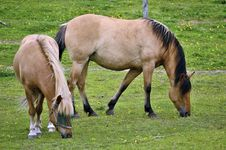 Free Two Horses Royalty Free Stock Photo - 25546735