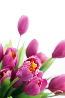 Free Pink Flowers Royalty Free Stock Image - 25558216