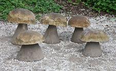 Free Wooden Mushroom Seats. Royalty Free Stock Photo - 25558535