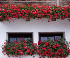 Free Windows Of The House With Flowers Royalty Free Stock Photo - 25564985