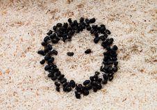 Free Bean Face Stock Photo - 25565230