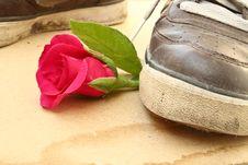 Free Shoe Trample Rose Royalty Free Stock Photo - 25565985
