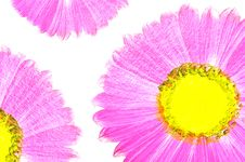 Beautiful Flower Painting Royalty Free Stock Image