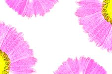 Beautiful Flower Painting Stock Photo