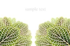 Free Blank For Sample Text With Green Grasses Royalty Free Stock Images - 25572069