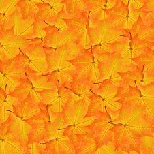 Free Red And Yellow Maple Leaves Background Stock Images - 25574014
