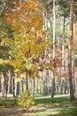 Free Autumn Park Stock Images - 25584824