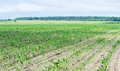 Free Farm Field Royalty Free Stock Images - 25589499