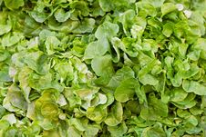 Free Green Salad Royalty Free Stock Photos - 25582318