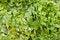 Free Green Salad Royalty Free Stock Photos - 25582318