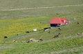 Free Cow Farm Mountain Royalty Free Stock Photos - 25596498