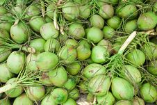 Free Coconuts Royalty Free Stock Photo - 25590835