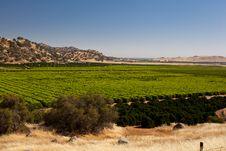 Free Orange Trees Plantation Stock Photo - 25592930