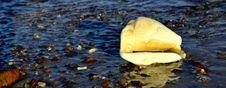 Free Shellfish On Morning Marine Beach Royalty Free Stock Photo - 25596045