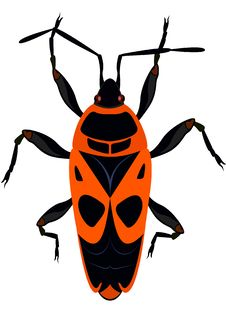 Beetle - The Soldier Stock Image