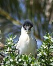 Free Huffy Heron Royalty Free Stock Image - 2561186