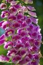 Free Purple Wildflowers Royalty Free Stock Image - 2563796