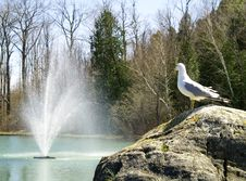 Free Seagull Watching Fountain Royalty Free Stock Photo - 2560535