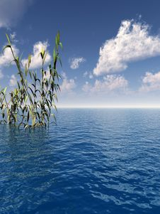 Free Water Plants Royalty Free Stock Photo - 2561795