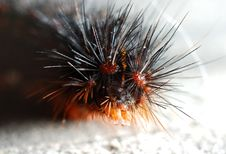 Free Catapillar Close Up Stock Image - 2562551