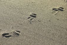 Beach Footprints Royalty Free Stock Photography