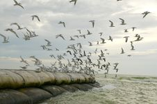 Free Seabirds Taking Flight Royalty Free Stock Image - 2563726
