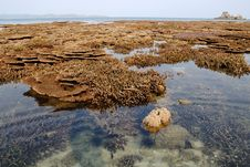 Free Coral Islands Under Water Stock Image - 2566011