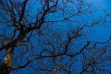 Free Dead Trees3 Stock Photo - 2566880